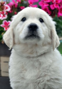 various pup photos 12th July 020 edit