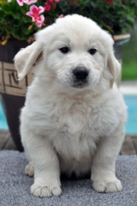 various pup photos 12th July 031 edit
