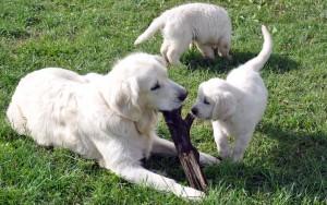 various pup photos 12th July 094 edit